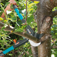 Tree Pruning Southnorwood