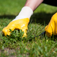 Lawn Repair Southnorwood