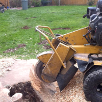 Stump Grinding Southnorwood