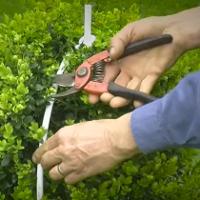 Weeding & Pruning Southnorwood